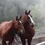 Bring some joy by providing arthritis medication for an elderly horse saved from slaughter. Bear Valley Rescue saves aged, unwanted and injured horses and gives them loving new homes.
