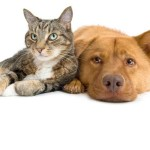Share some joy by providing food, medicine and shelter to an abandoned cat or dog. The Hope Sanctuary in Barbados rescues abused cats and dogs and helps find them loving new homes.