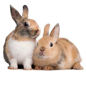 Bring some joy by giving food and shelter to two abandoned pet rabbits.Vancouver Rabbit Rescue & Advocacy shelters abandoned or unwanted pet rabbits and finds them loving new homes.